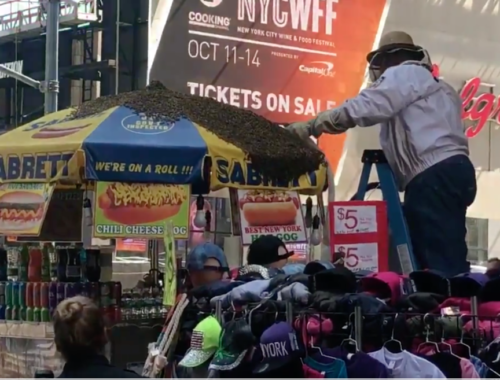 Buzz off! Bees swarm Times Square hot dog stand