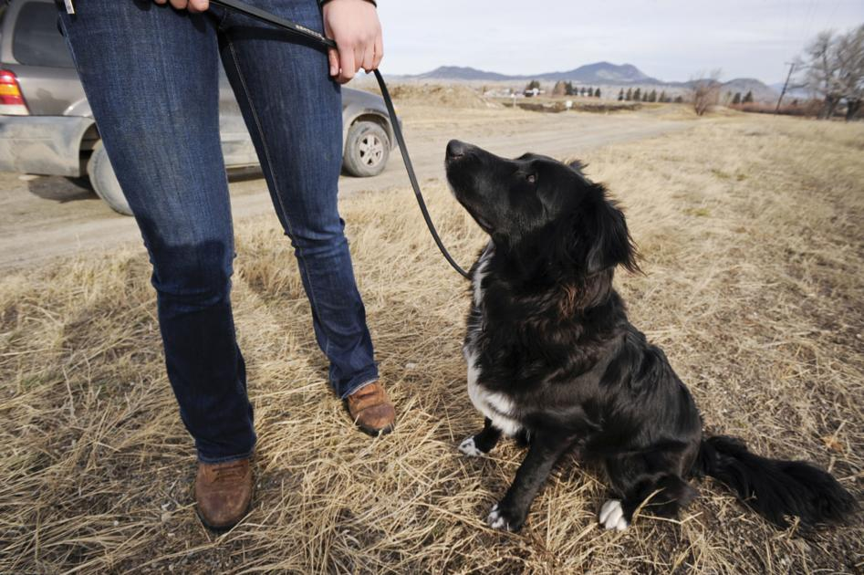 Carroll College student training dog to find archaeological sites | Regional News