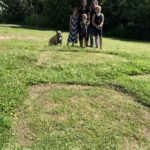 Generating a buzz: Moncton family mows letter B into their yard to help local bee population - New Brunswick