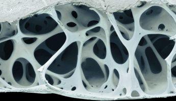 Bone Closeup