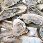 Nearly 200 ill in UK after eating oysters