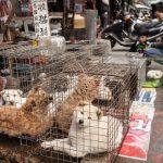 China may soon ban dog meat trade