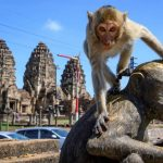 Monkey menace: Humans try to wrest back Thai town from junk food-addled primates