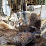 Trapper's education course is Sept. 12 in Wadena