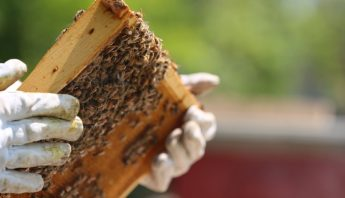 What's the Buzz?: Applications Open for NL Honey Bee Program